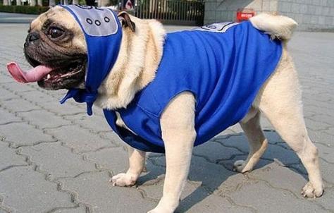 cosplay-naruto-dog