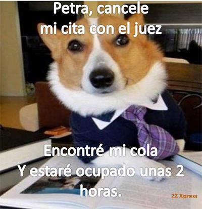 PerroA3