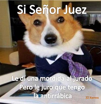 PerroA4