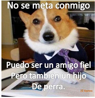 PerroA6
