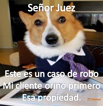 PerroA7