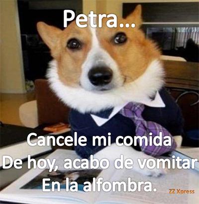 PerroA9